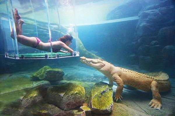 Crocodile Cage Diving Incl Entry, Darwin - NT