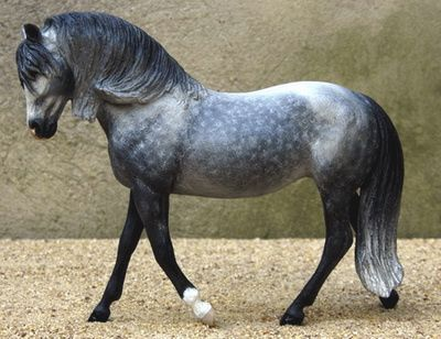 andalusian (one of my favourite breeds) | Heartland ...