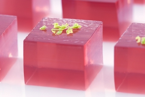 Cosmopolitan Jello Shots (from jelly Shot Test Kitchen) liquid-foodie ...
