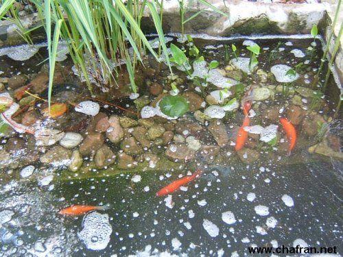 1000 id es sur le th me bassin pour poisson sur pinterest for Jardiland bassin poisson