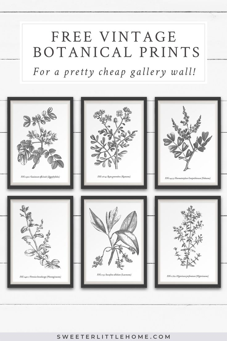 Free vintage botanical prints wall art