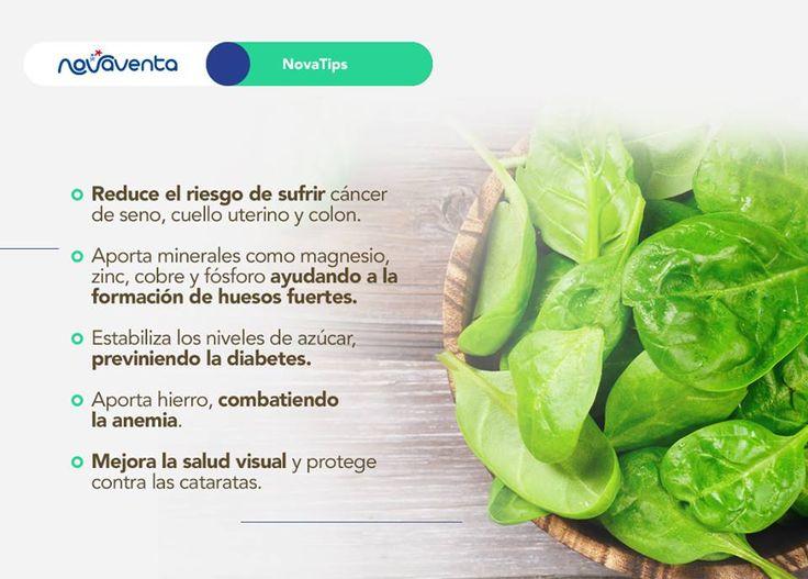 La espinaca es uno de los vegetales más consumidos en todo el mundo, convirtiéndose a la vez en una gran fuente de nutrientes para el organismo. Aquí te mostramos algunos de sus beneficios. Consúmela en sopas, jugos o al vapor.