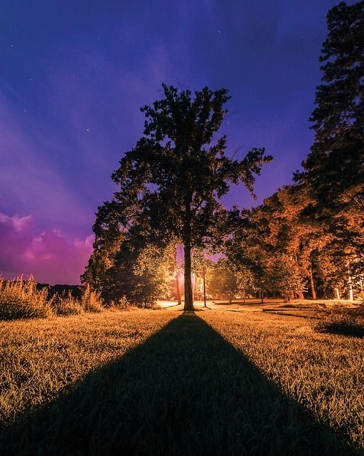 У каждого человека в жизни есть два дерева: одно — дерево счастья, другое — дерево печали. Какое дерево будешь поливать, такие плоды и будешь вкушать.