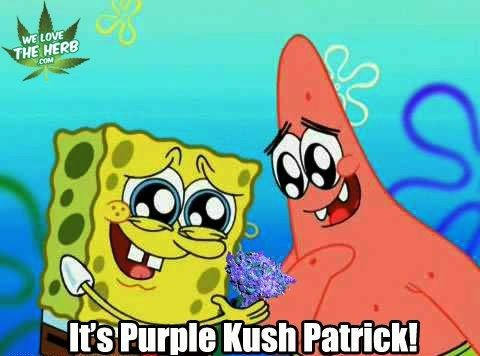 It's Purple Kush Patrick!