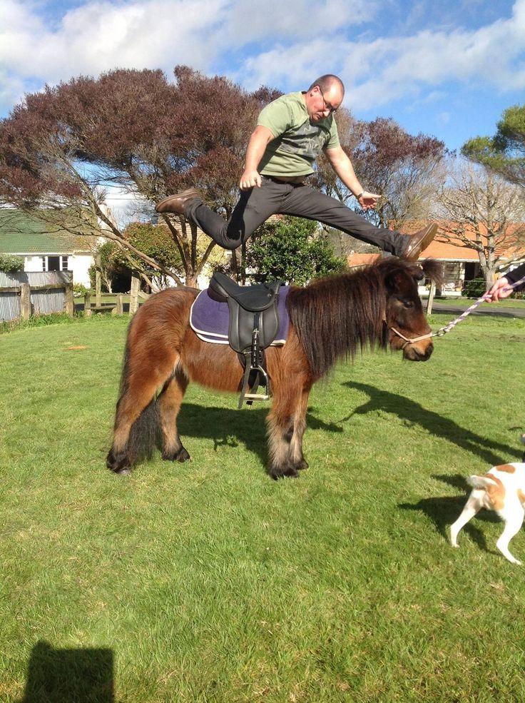 A Little Horse Jumping