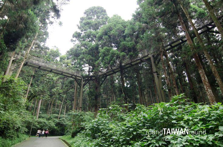 Xitou Nature Education Area 溪頭森林遊樂區