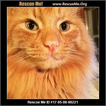 ― Wisconsin Norwegian Forest Cat Rescue ― ADOPTIONS ― RescueMe.Org