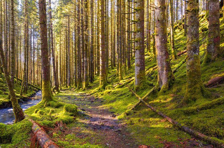 Forest Trail by Eirik Sørstrømmen on 500px