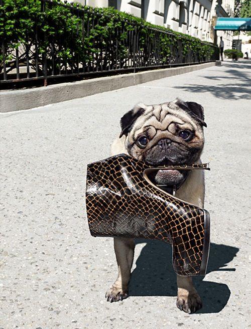 raymond meier for Vogue