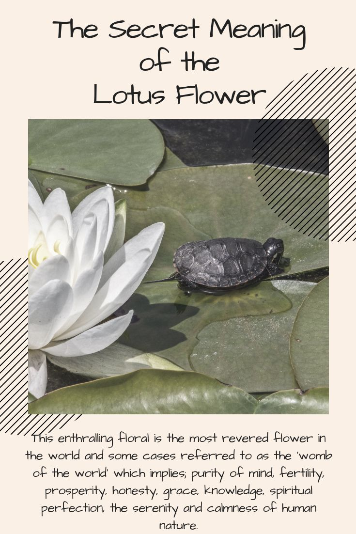 The Secret Meaning Of The Lotus Flower Alchemy Jewelry Knowledge