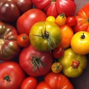 Consuming more lycopene the carotenoid that makes tomatoes red may protect your skin from - Foods protect skin sunburn ...