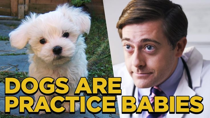 Dogs are Practice Babies http://babo1.com/gt14