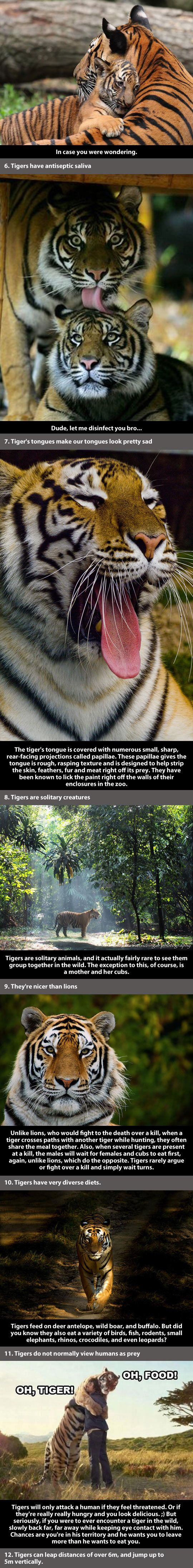Tigers are awesome! I'm going to find a documentary on Netflix.