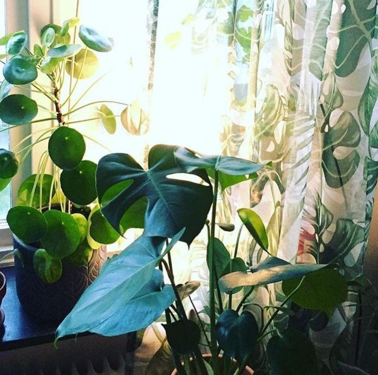 263 best Grünpflanzen Zimmerpflanzen images on Pinterest Green - pflanzen für wohnzimmer