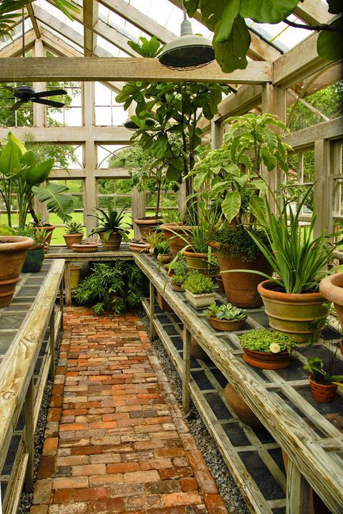 Gentlemanbobwhite: U201c The Mulberry Plantation Greenhouse U201d