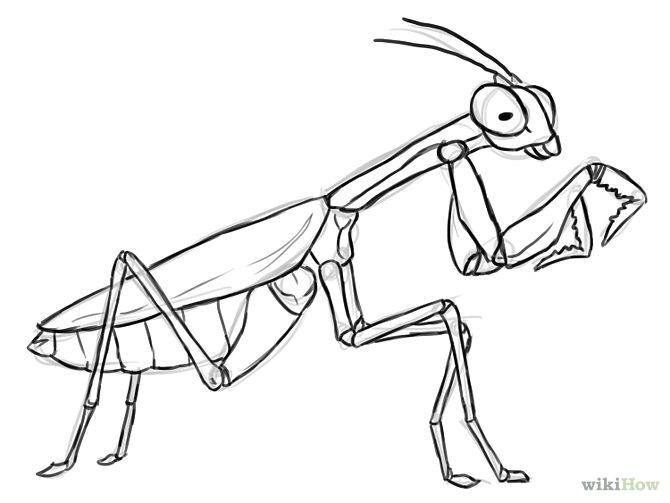 Praying Mantis Drawing Google Search Coloring Pages