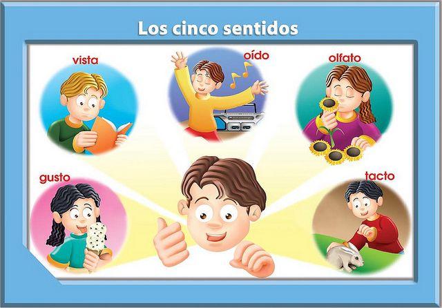 Los Sentidos Para Ninos Aprendamos Ya El Cuerpo Humano Los Sentidos Para Ninos Ninos Aprendiendo Actividades 5 Sentidos