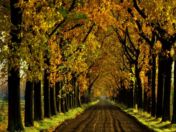 Season wallpaper 155 pinterest fall desktops voltagebd Choice Image
