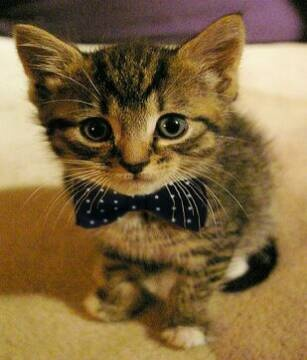 Normally I hate it when people dress their pets in clothes, but I'll make an exception for this polka-dot bowtie :)