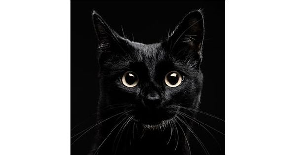 Cats Protection   National Black Cat Day 2016