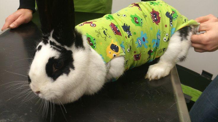 11 besten bunte bunny bodys Bilder auf Pinterest   Kaninchen, Hase ...