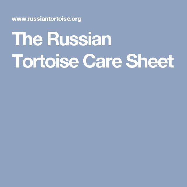 The Russian Tortoise Care Sheet