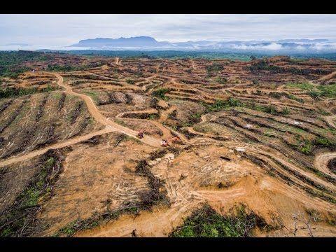 Pepsi, McDonalds, Nestle, other major brands implicated in illegal destruction of critical elephant habitat - Salon.com