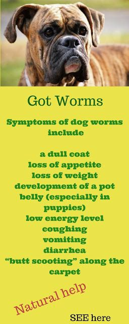 Natural wormer for dogs and cats. Symptoms of worms in your dog, http://bulldogvitamins.blogspot.com/2017/02/spot-worms-in-your-dogs-more-than-90.html