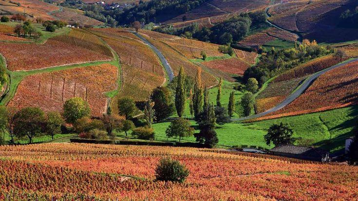 Bing Images - Beaujolais Landscape - Paysage du Beaujolais en automne ...