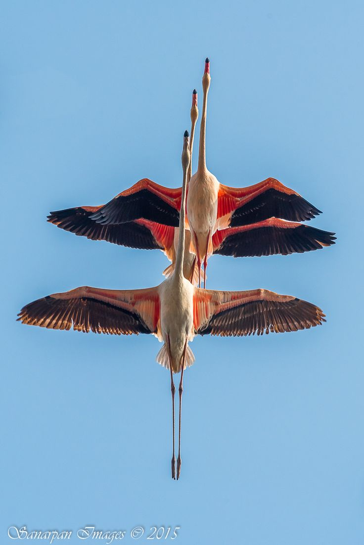 °°The Flamingo Squadron by Sanjay Patil on 500px°°   ........................................................ Please save this pin... ........................................................... Because For Real Estate Investing... Visit Now!  http://www.OwnItLand.com