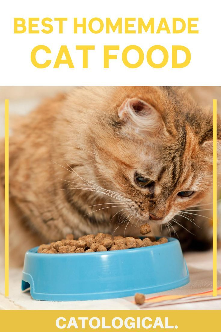 Best Homemade Cat Food Recipes Raw Or Cooked Make Your Own In 2020 Homemade Cat Food Kitten Food Homemade Cat Nutrition