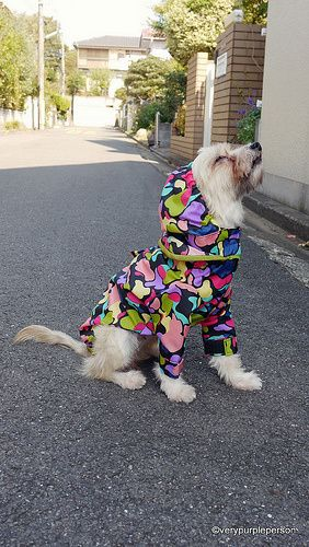 dog raincoat pattern