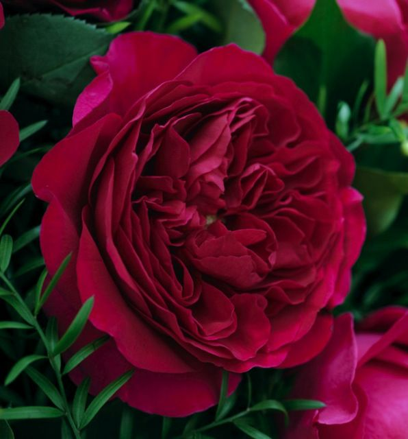 Roses In Garden: 155 Best Images About Pink/ Mauve Flowers On Pinterest