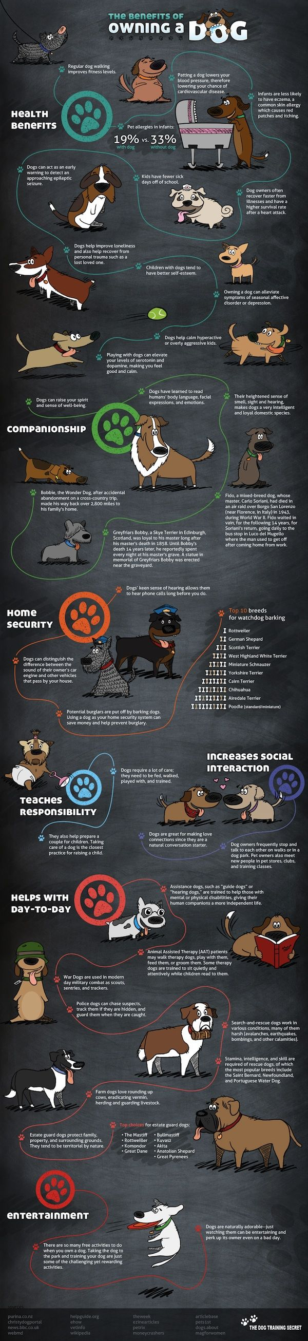 Infographic: The Benefits Of Owning A Dog
