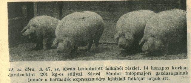 Mangalica varken uit Hongarije.