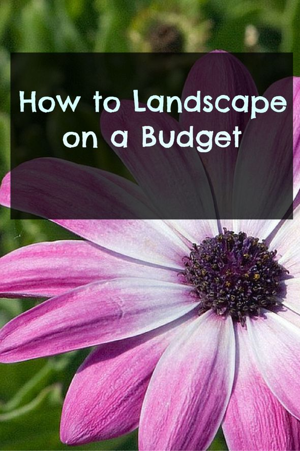 Need some easy, budget friendly ideas for your yard?  Here are several ideas on how to spruce up the yard without breaking the bank. http://frametofreedom.com/how-to-landscape-budget/