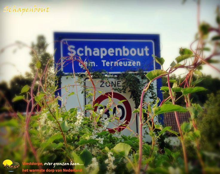 Schapenbout - Axel, Gemeente Terneuzen