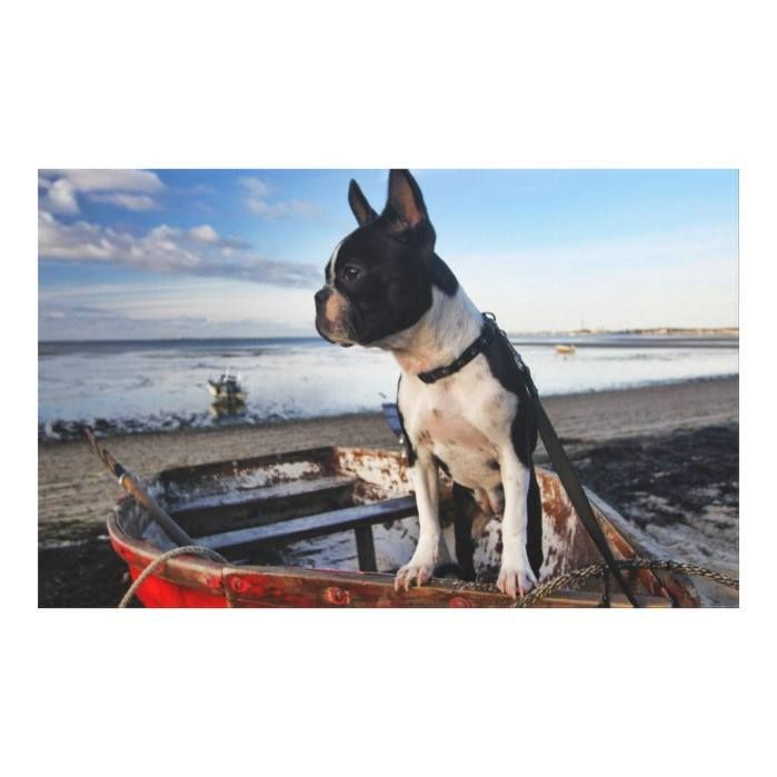 Customizable #Animal#Head #Animal#Portrait #Animal#Theme #Bay #Beach #Beached #Boston#Terrier #Canis#Lupus#Familiaris #Cloud #Coastline #Collar #Color#Image #Day #Dogs #Focus#Foreground #Front#View #Full#Length #Horizon#Over#Water #Horizontal #Leash #Looking#Around #Mammals #Massachusetts #Oar #Observant #One#Animal #Outdoor#Pursuit #Outdoors #Pets #Photography #Readers#Collection #Reflections #Row#Boat #Sand #Scenics #Sky #Standing #Temperate#Climate #Tourism #Travel#Destination #Truro #Usa…