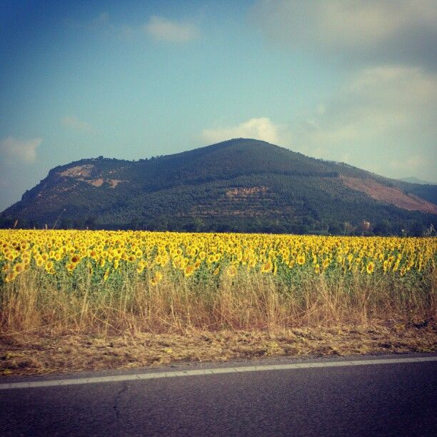 Driving from Pisa to Lucca!