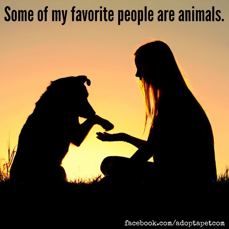 64 Best Images About Animal Quotes We Love On Pinterest