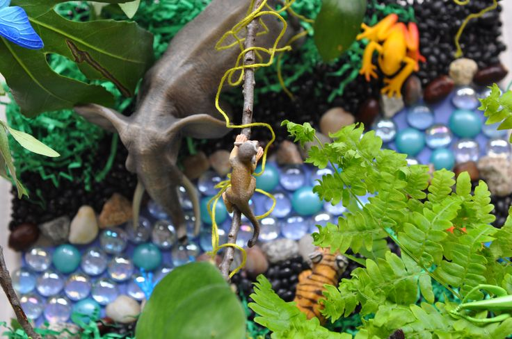 Set up a jungle in a sensory bin. Show a variety of wildlife of a rainforest.  Sensory bin ingredients: black beans, green shredded paper, green yarn, marbles, sticks, leaves, tree branches, toy animals and insects.
