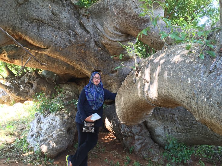 Hoedspruit  2000 yr old Baobab