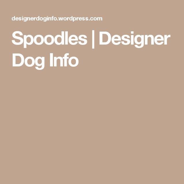 Spoodles | Designer Dog Info