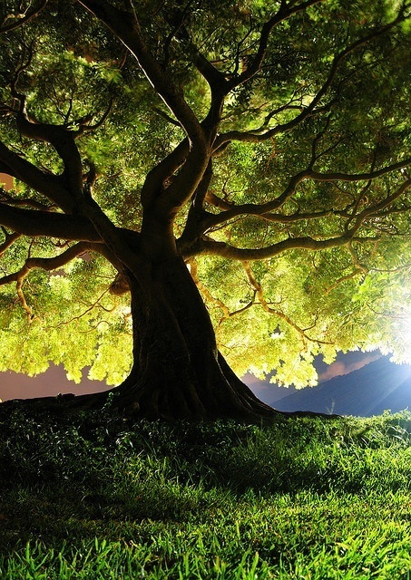 This tree could be anywhere and everywhere...from Narnia to my own dream garden
