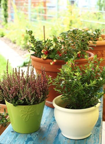 The perfect plants, start with the perfect pots!Jo Hartmann, with Cactus and Tropicals, spells out what to look for in a good gardening container.