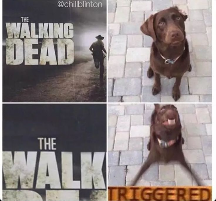Literally my dog whenever she hears that word