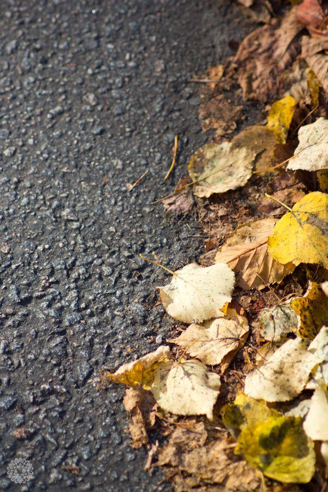 autumn-yellow-and-gray-2013_rumiram