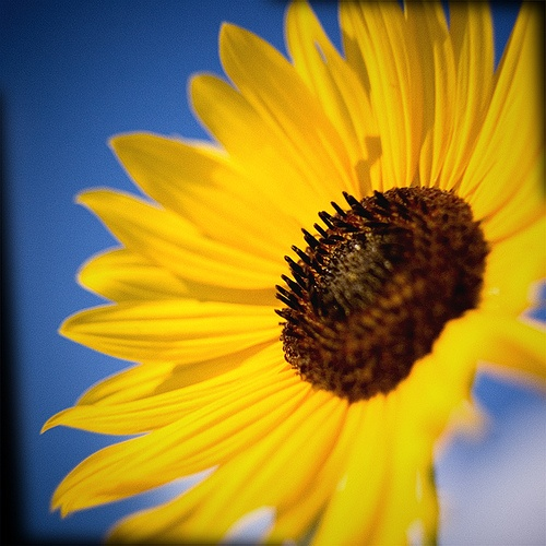 sunny side up by blamfoto, via Flickr