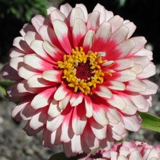 37 Best Kathleens Flowers Images On Pinterest Flower