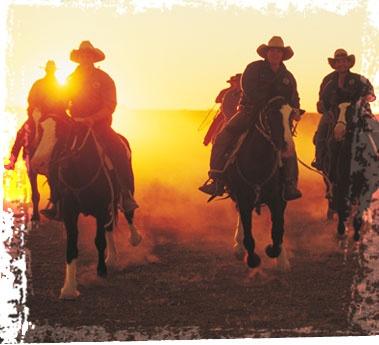 southaustralia.com/HP_cattle.jpg
